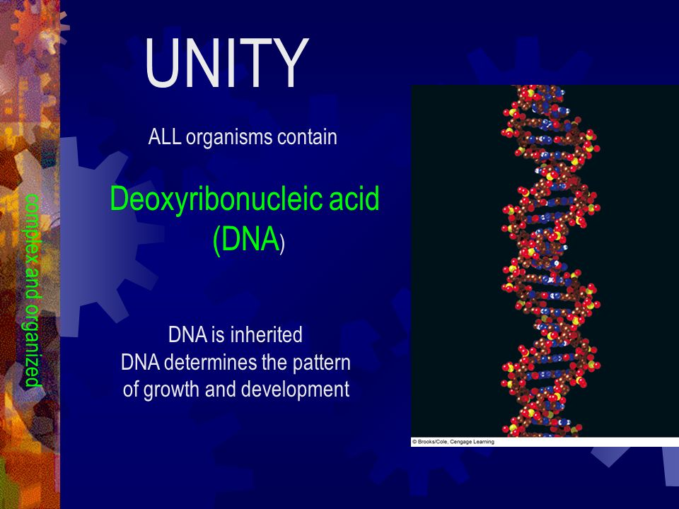 UNITY Deoxyribonucleic acid (DNA) ALL organisms contain
