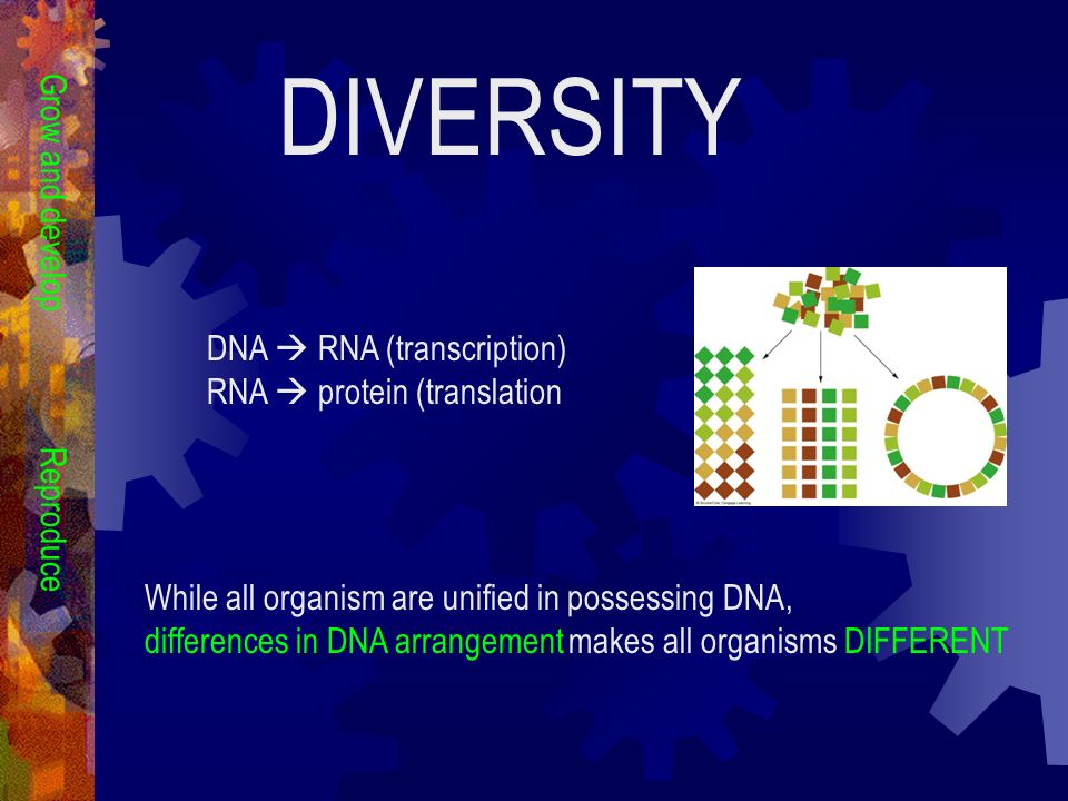 DIVERSITY Grow and develop DNA  RNA (transcription)