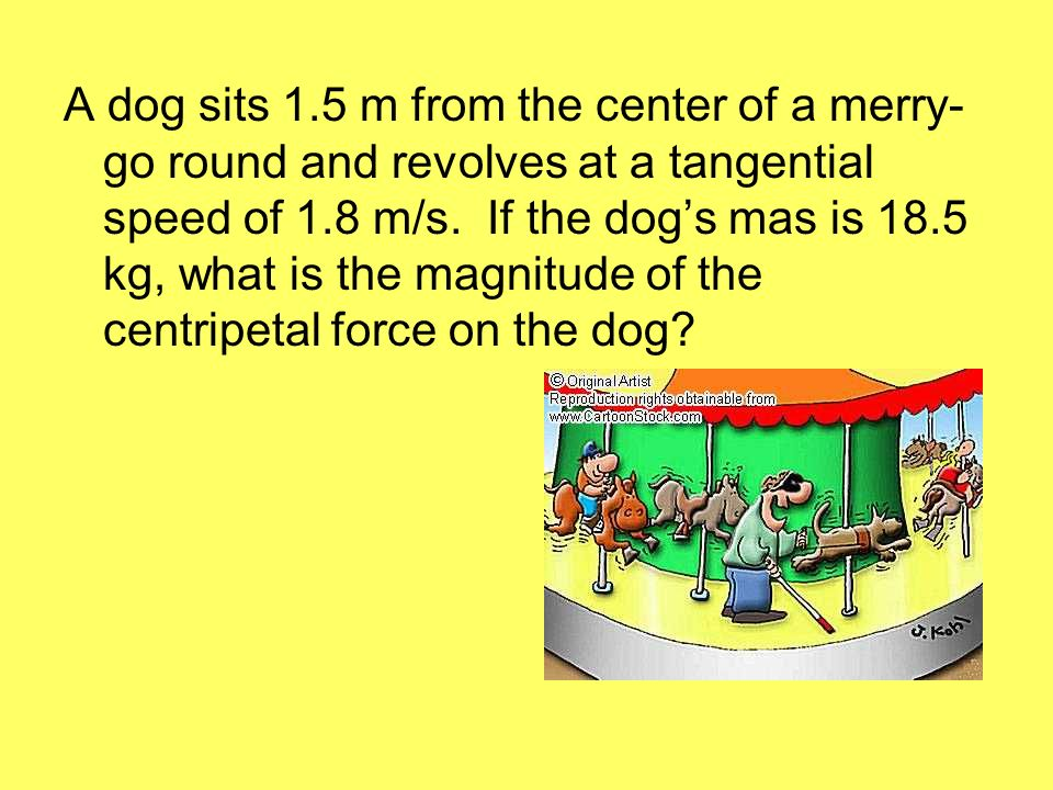 A dog sits 1.5 m from the center of a merry-go round and revolves at a tangential speed of 1.8 m/s.