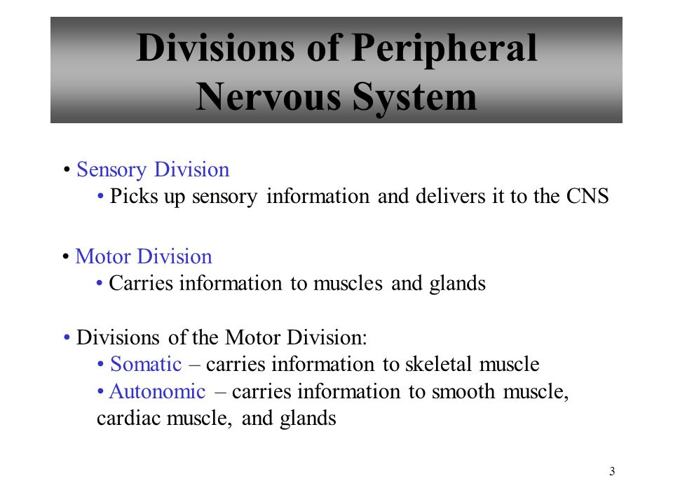 10.1: introduction cell types in neural tissue: neurons - ppt, Muscles