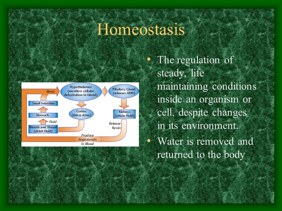 Homeostasis The regulation of steady, life maintaining conditions inside an organism or cell, despite changes in its environment.