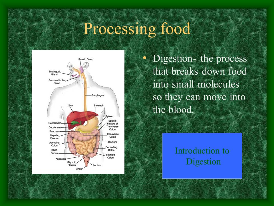 Processing food Digestion- the process that breaks down food into small molecules so they can move into the blood.