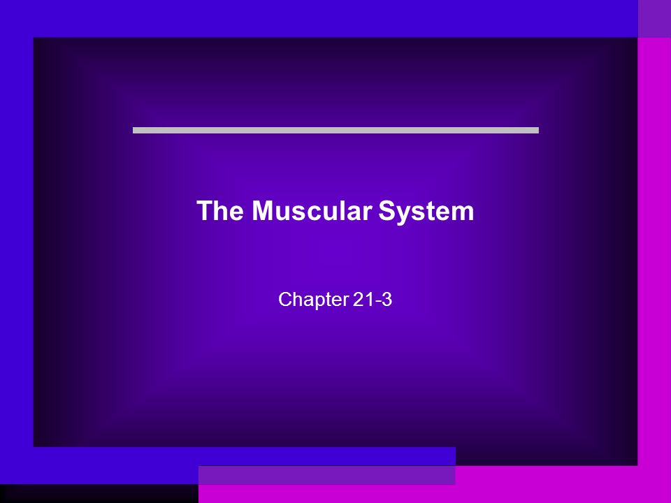 The Muscular System Chapter 21-3