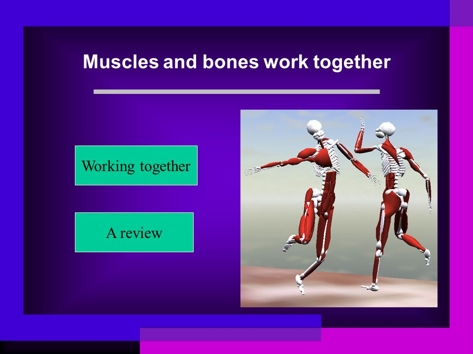 Muscles and bones work together
