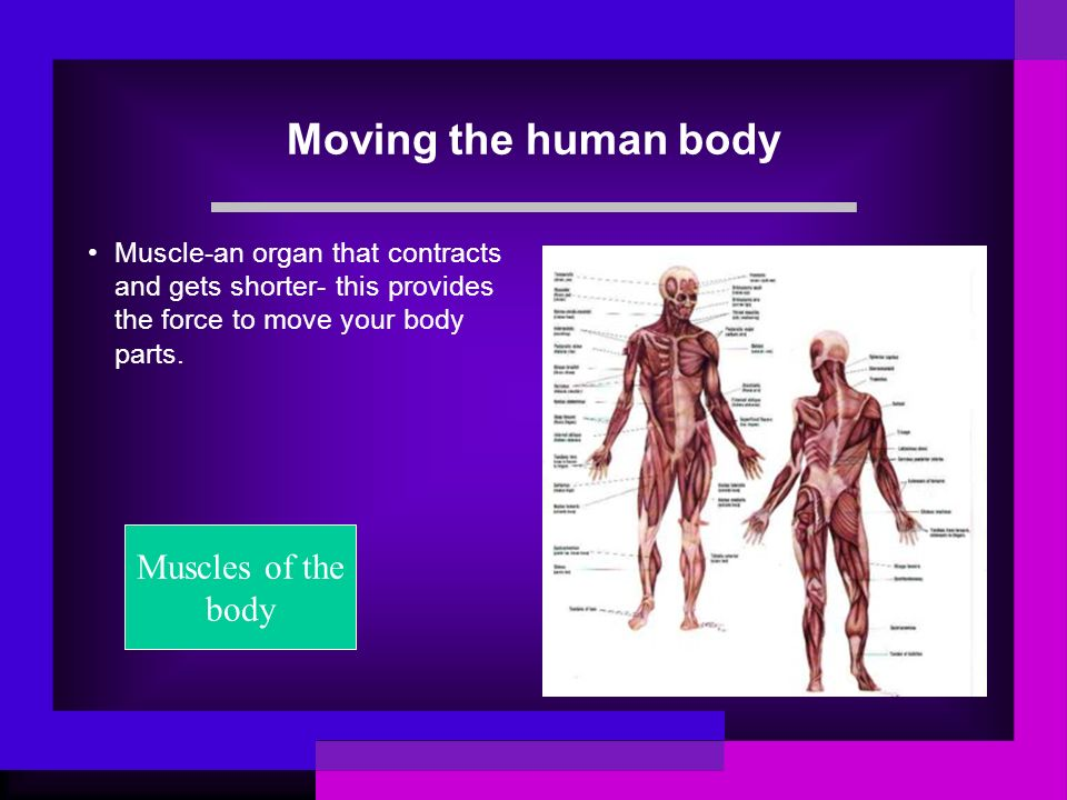 Moving the human body Muscles of the body