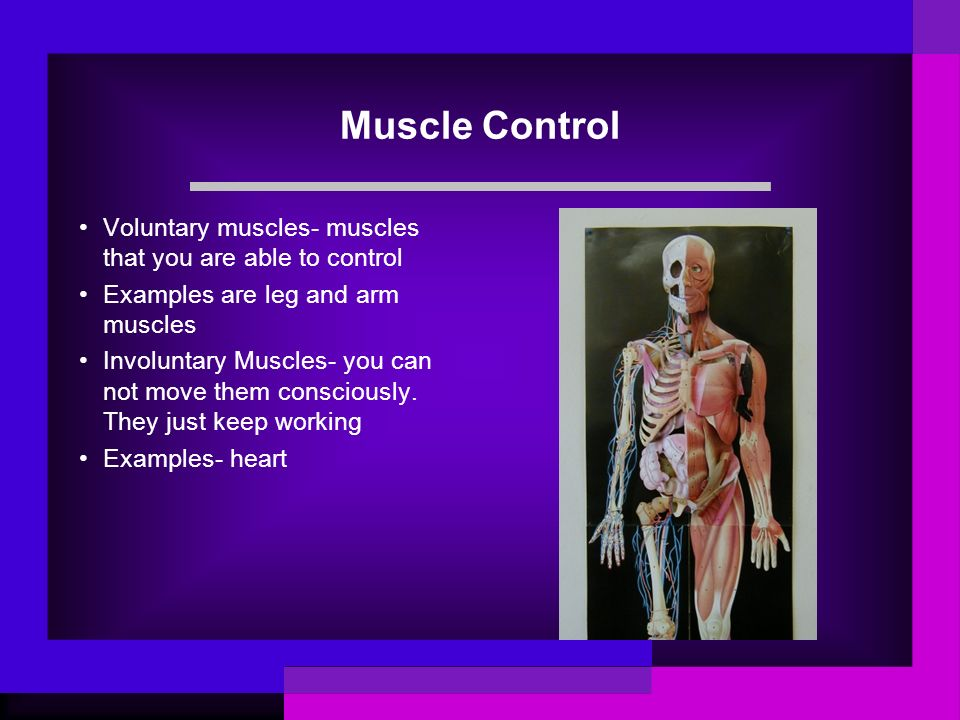 Muscle Control Voluntary muscles- muscles that you are able to control