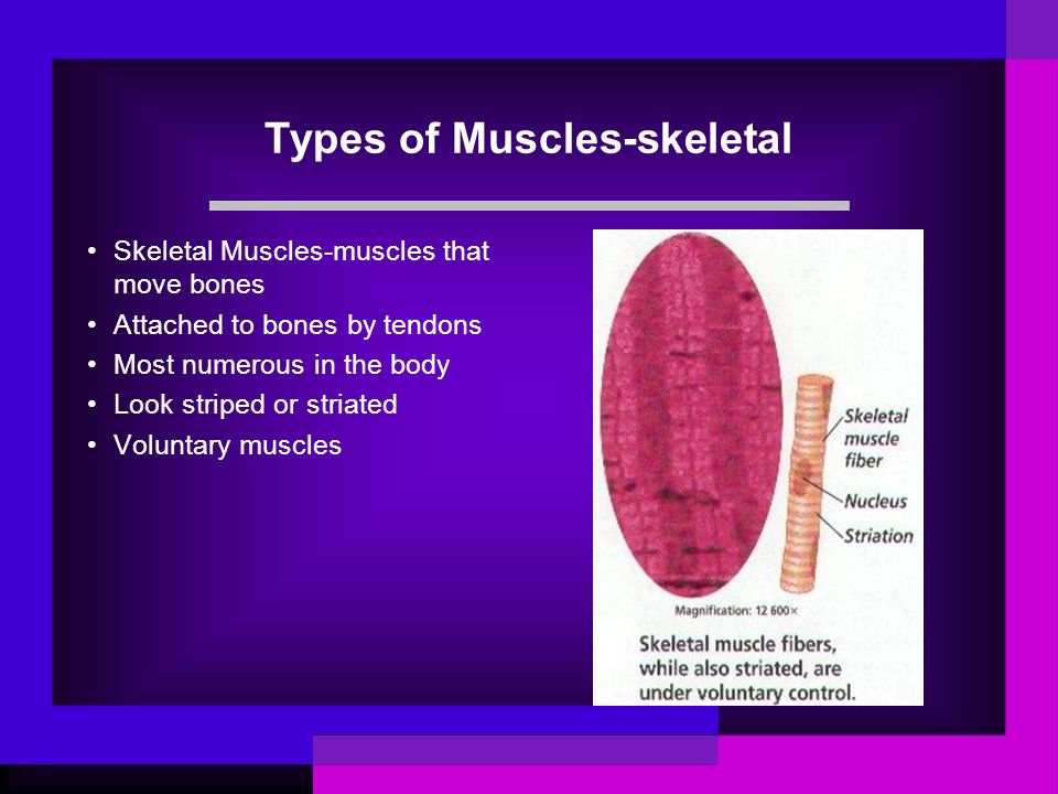 Types of Muscles-skeletal