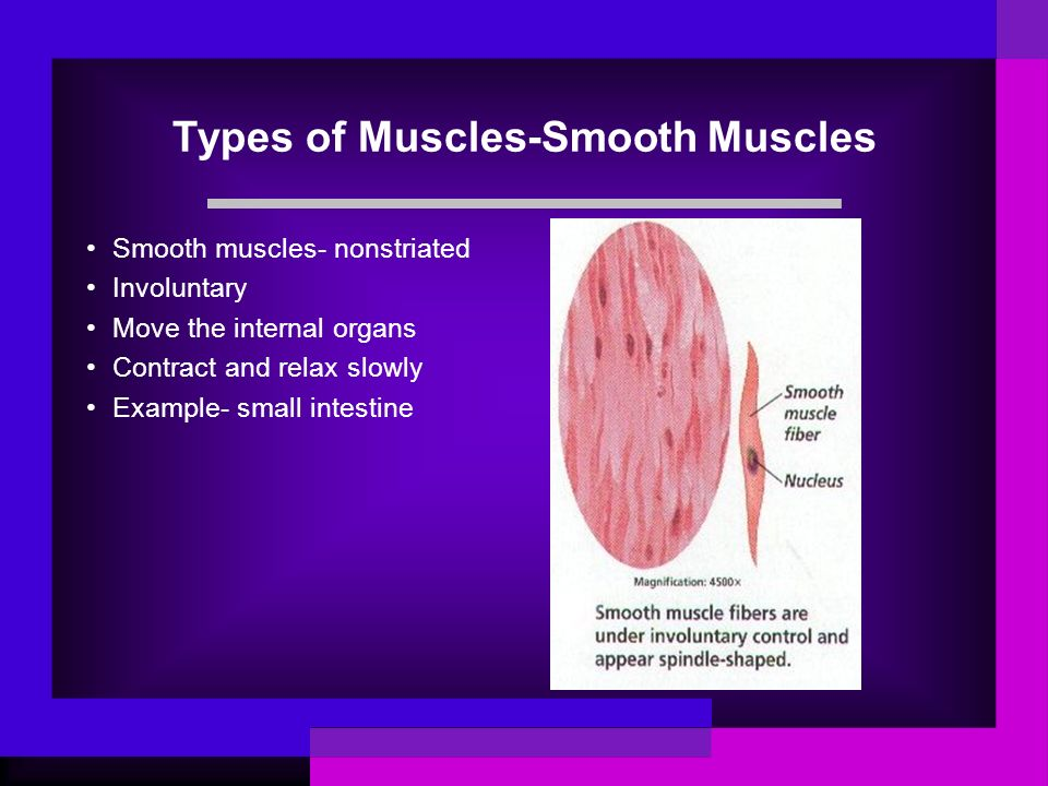 Types of Muscles-Smooth Muscles