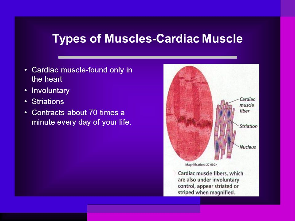 Types of Muscles-Cardiac Muscle
