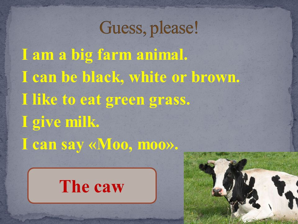 Guess, please! I am a big farm animal. I can be black, white or brown. I like to eat green grass. I give milk. I can say «Moo, moo».