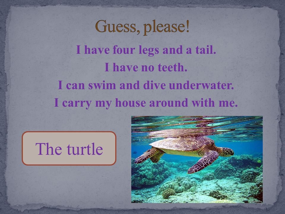 Guess, please! The turtle