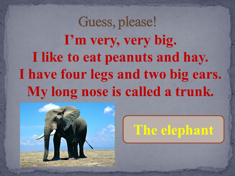 Guess, please! I'm very, very big. I like to eat peanuts and hay. I have four legs and two big ears. My long nose is called a trunk.