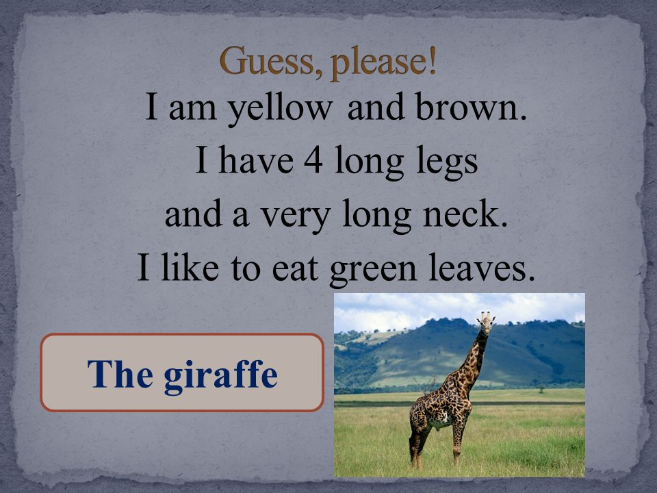 Guess, please! I am yellow and brown. I have 4 long legs and a very long neck. I like to eat green leaves.