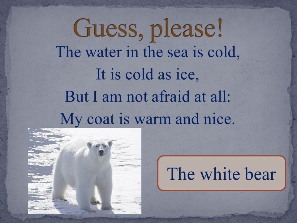 Guess, please! The white bear