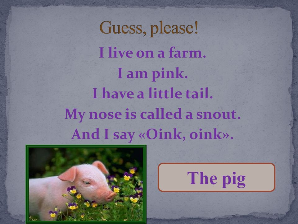 Guess, please! I live on a farm. I am pink. I have a little tail. My nose is called a snout. And I say «Oink, oink».