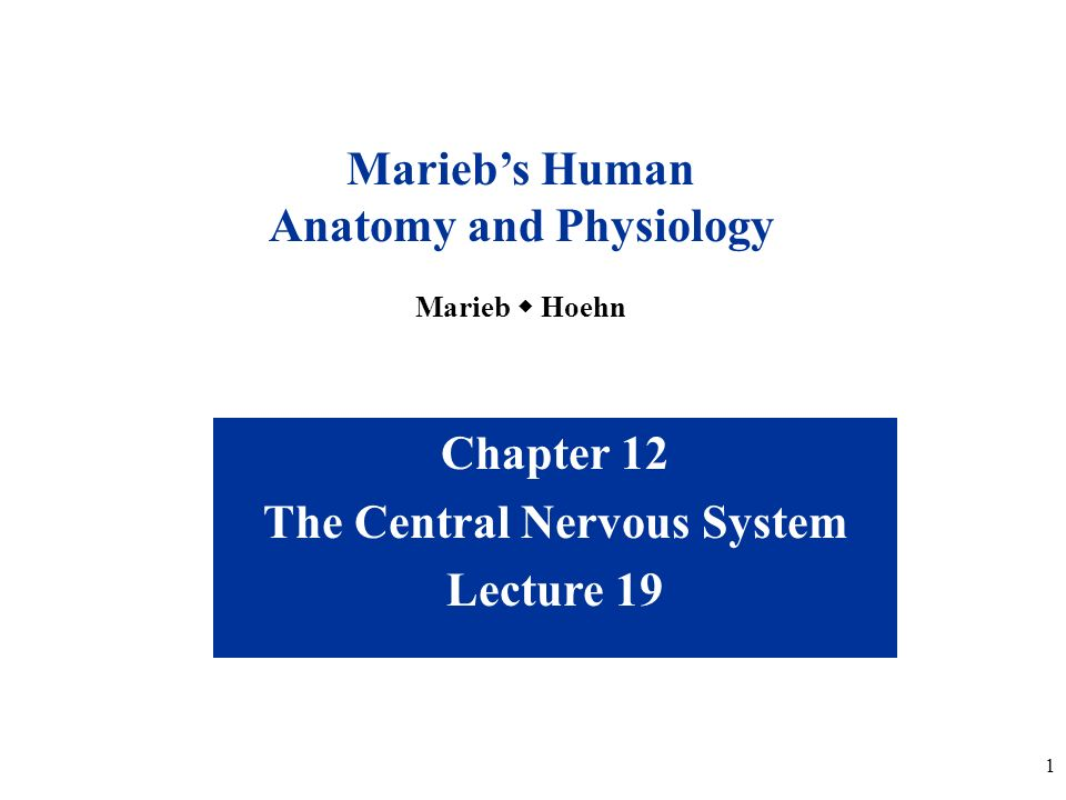 Anatomy and Physiology The Central Nervous System - ppt video online ...