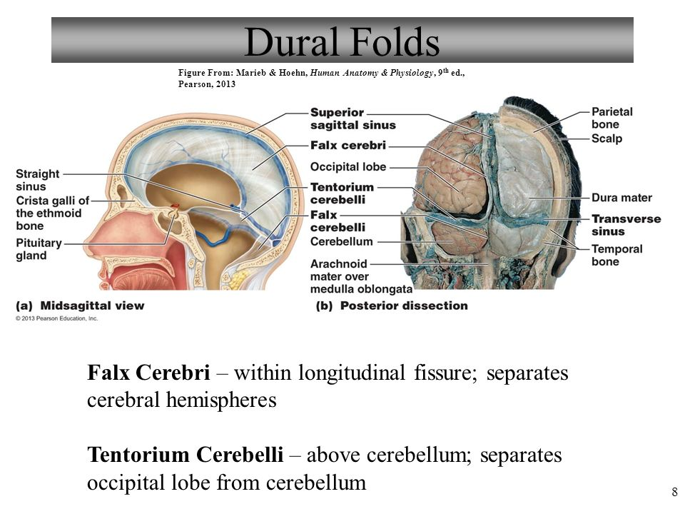 Anatomy and physiology - irosh.info