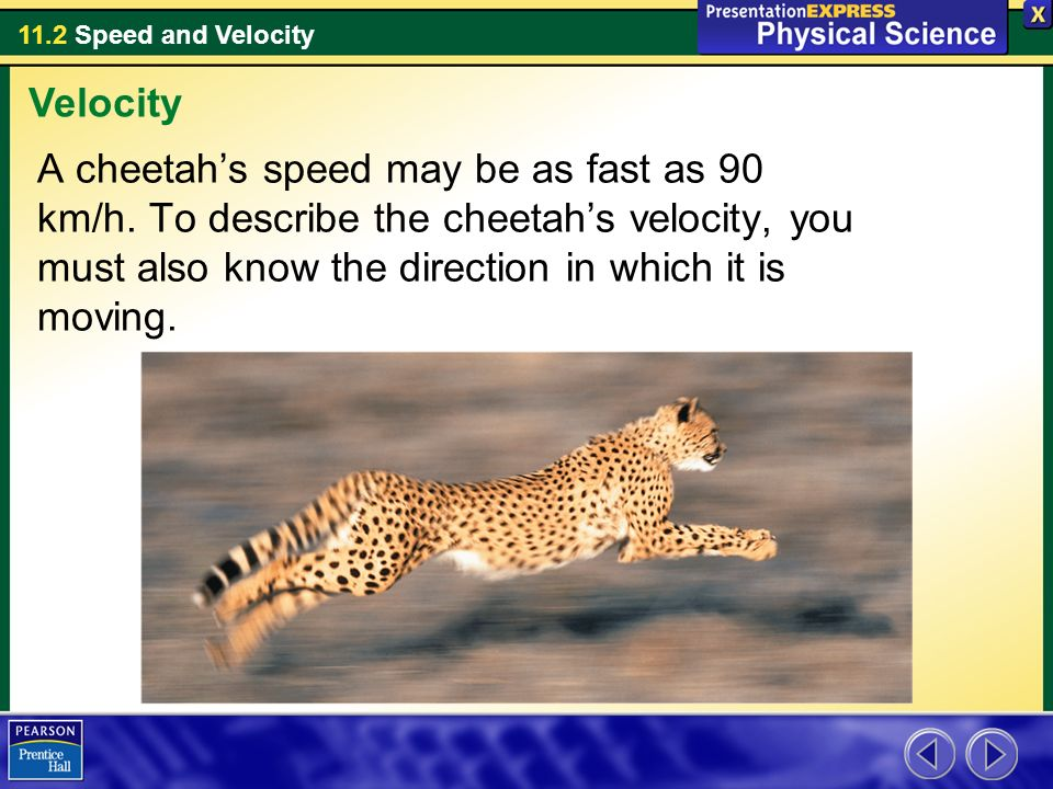 Velocity A cheetah's speed may be as fast as 90 km/h.