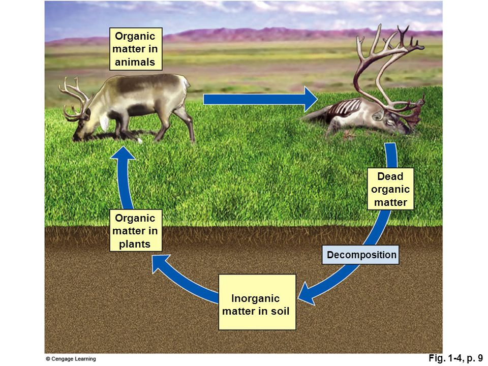 Organic matter in animals Dead organic matter Organic matter in plants