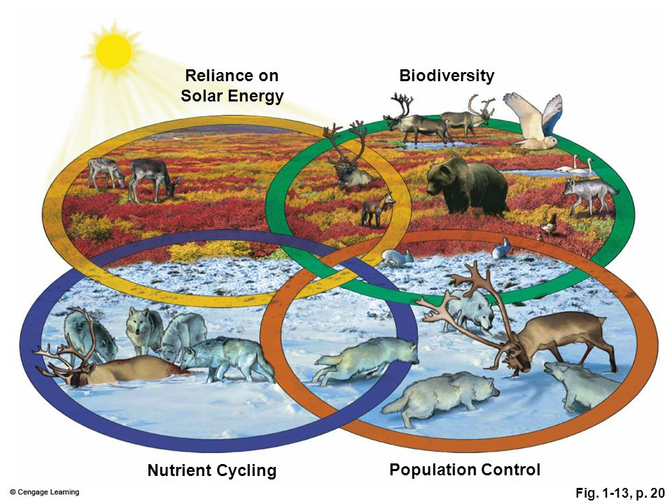 Reliance on Solar Energy