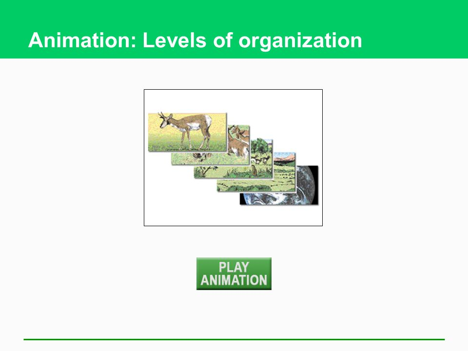 Animation: Levels of organization