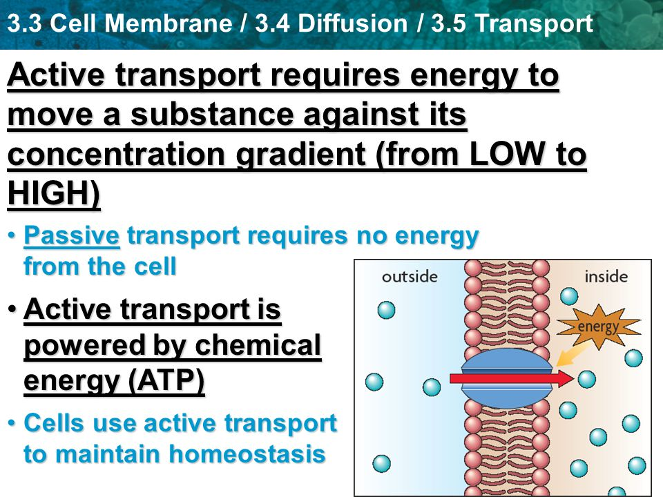Active transport requires energy to move a substance against its concentration gradient (from LOW to HIGH)
