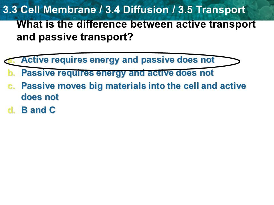 What is the difference between active transport and passive transport