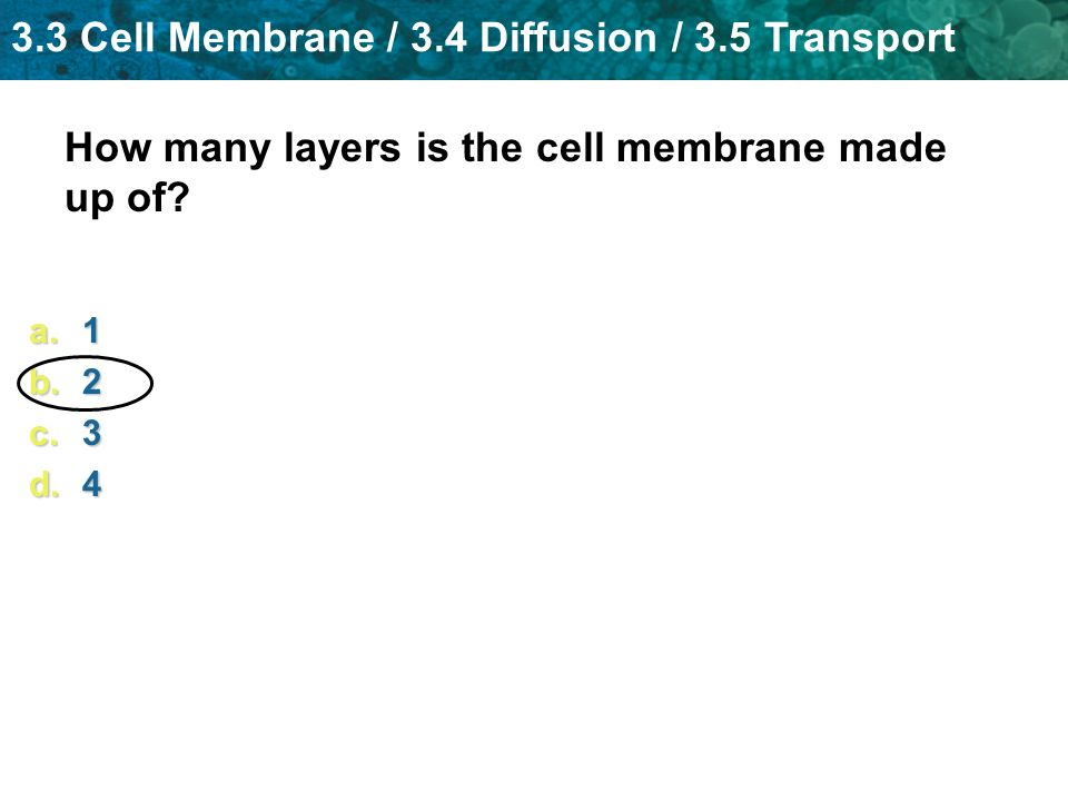 How many layers is the cell membrane made up of