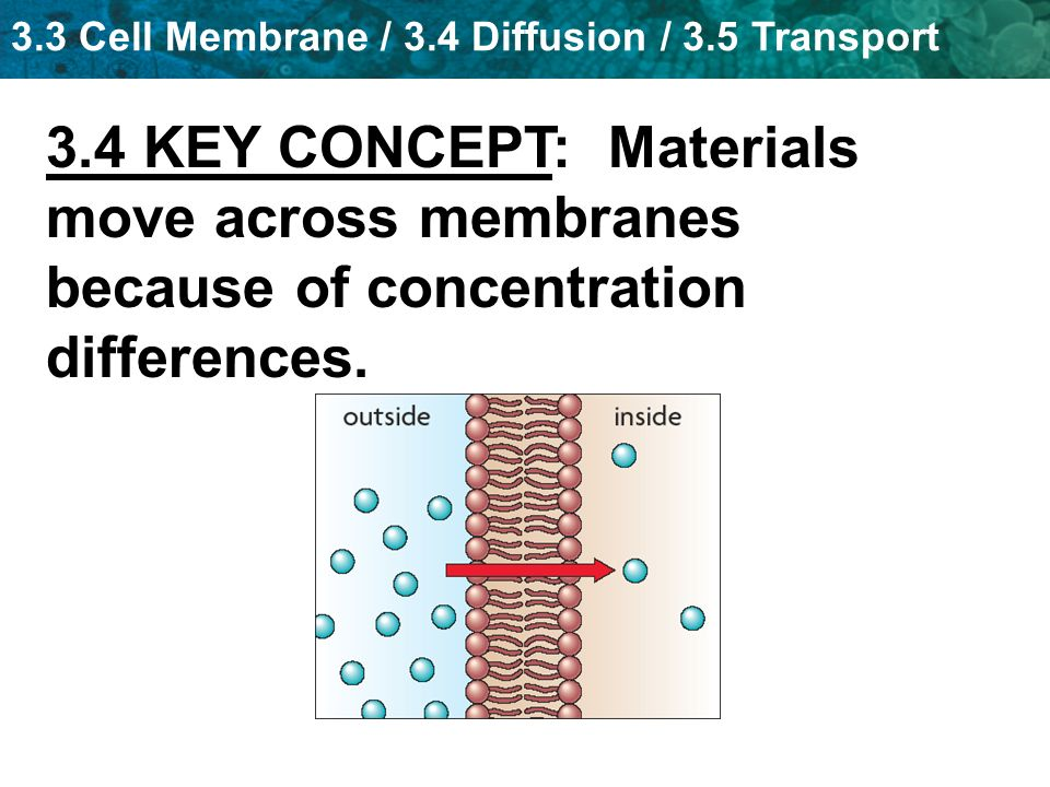3.4 KEY CONCEPT: Materials move across membranes because of concentration differences.