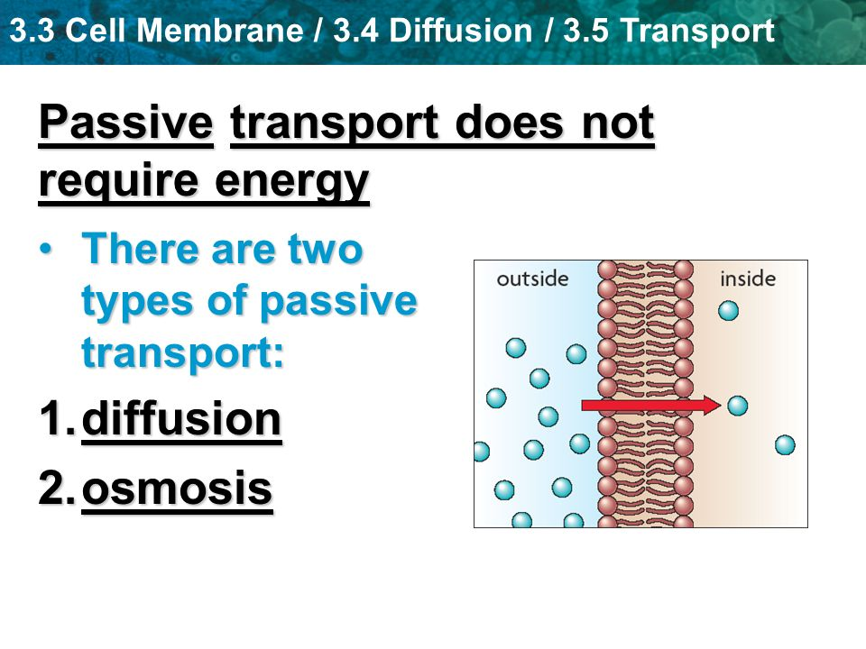 Passive transport does not require energy