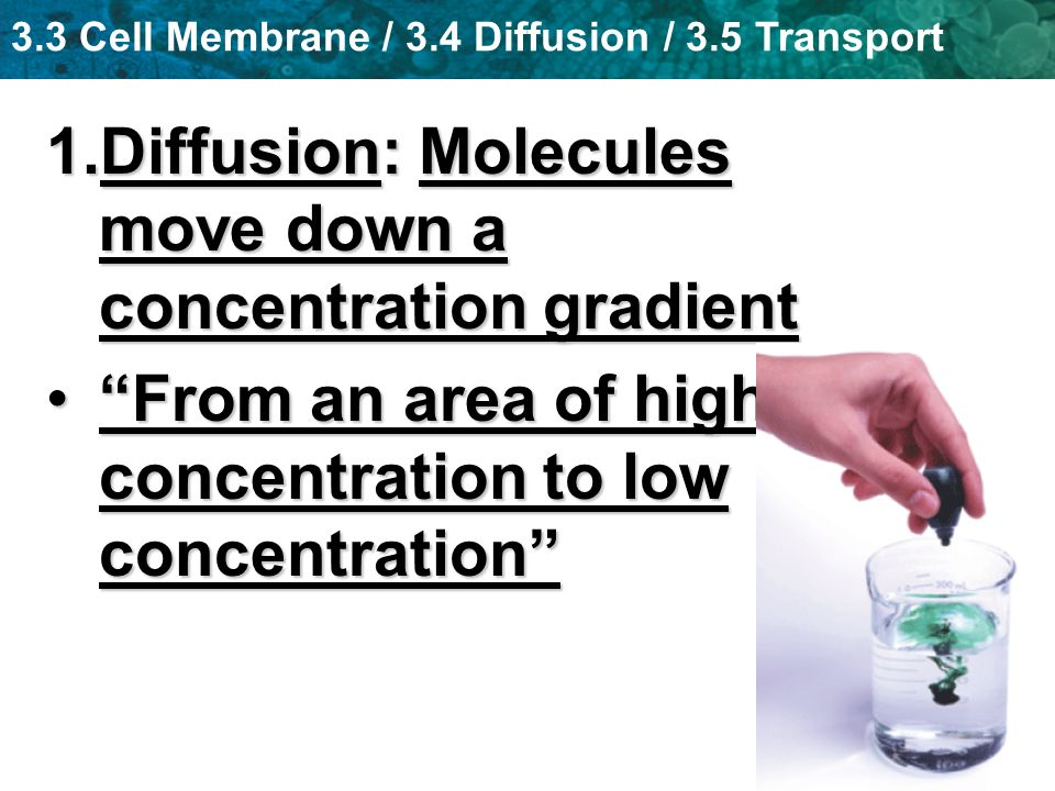 Diffusion: Molecules move down a concentration gradient