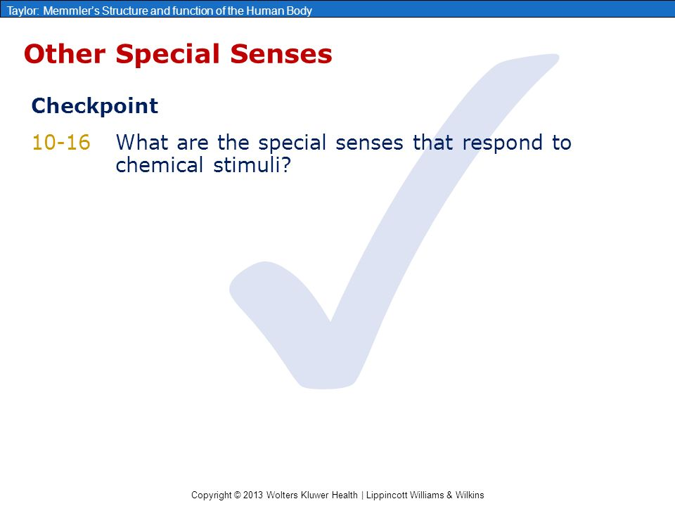 Chapter 10: The Sensory System - ppt video online download