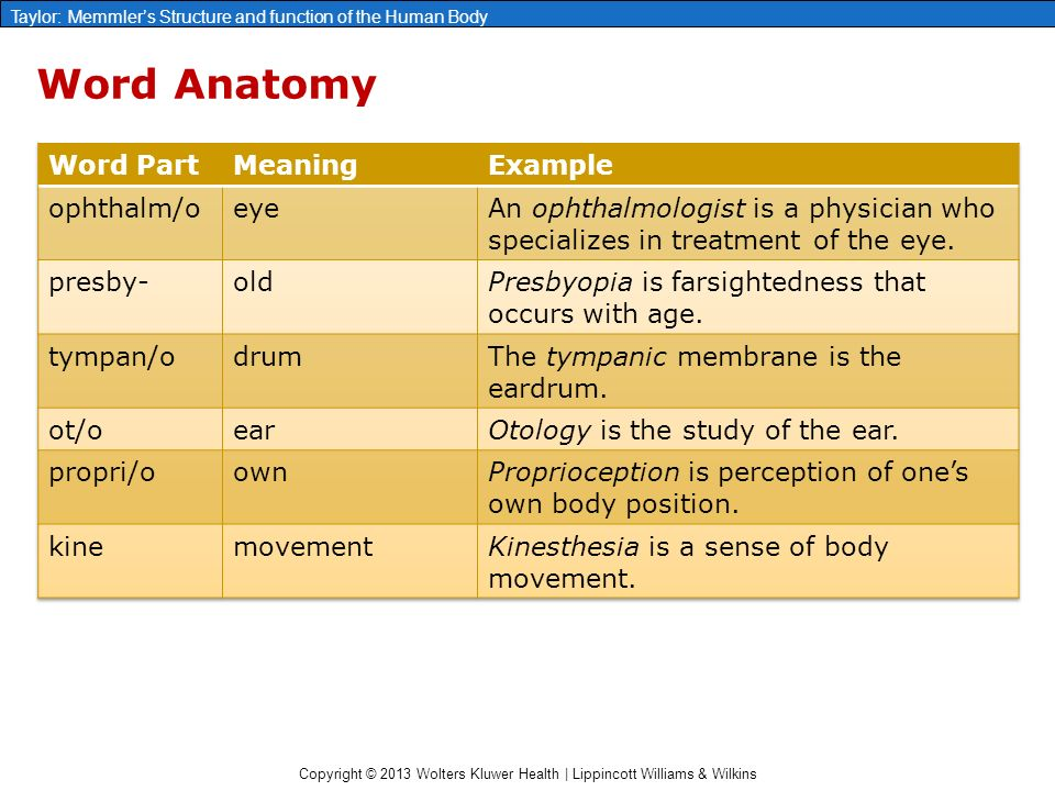 Fantastic Origin Of The Word Anatomy Collection - Anatomy And ...