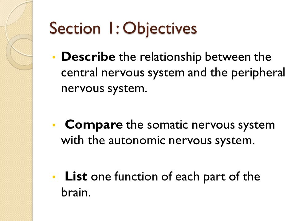 Section 1: Objectives Describe the relationship between the central nervous system and the peripheral nervous system.