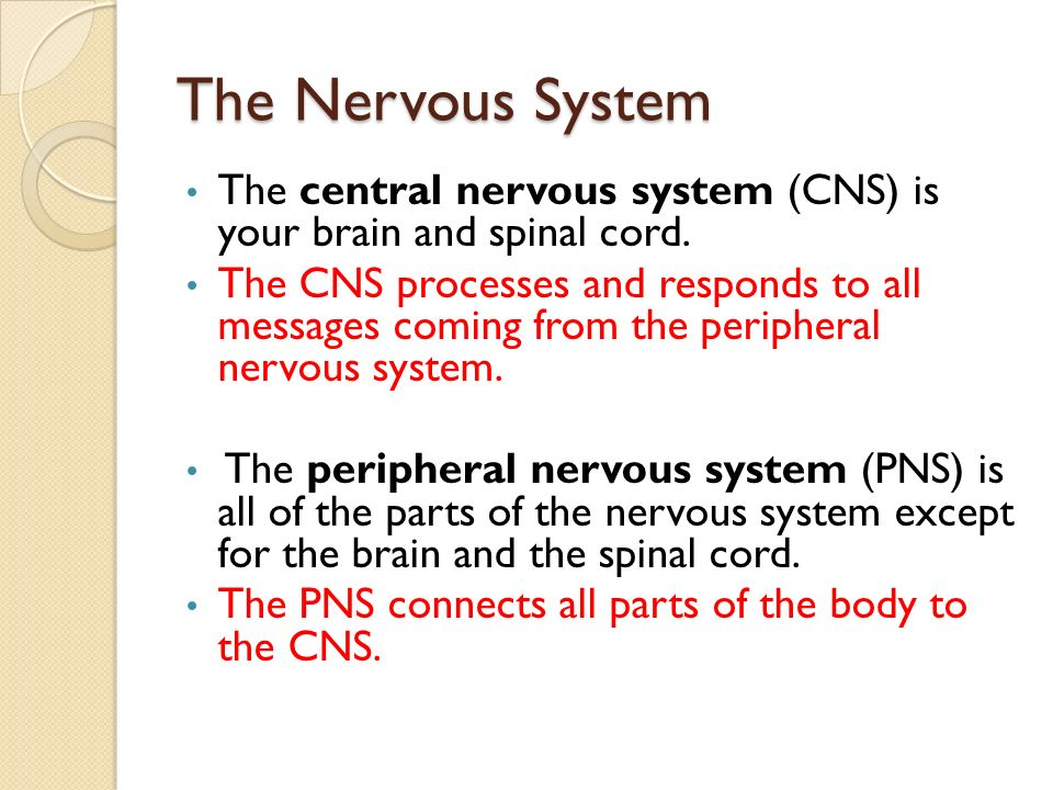 The Nervous System The central nervous system (CNS) is your brain and spinal cord.
