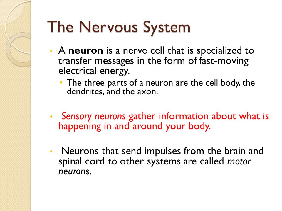 The Nervous System A neuron is a nerve cell that is specialized to transfer messages in the form of fast-moving electrical energy.