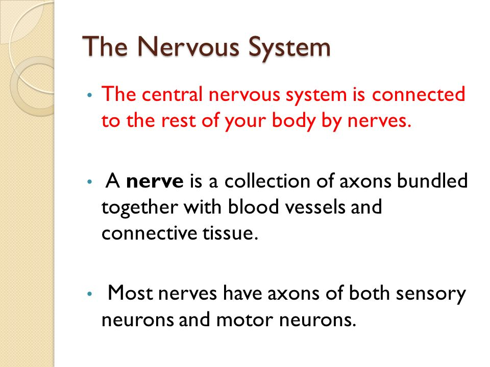 The Nervous System The central nervous system is connected to the rest of your body by nerves.
