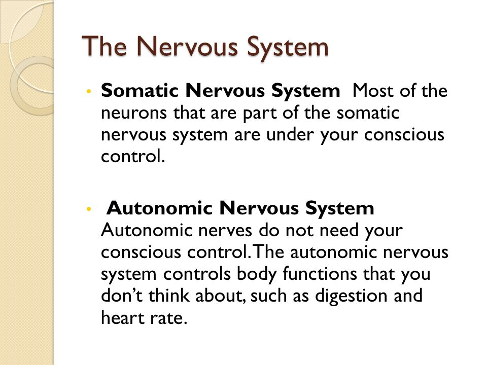 The Nervous System Somatic Nervous System Most of the neurons that are part of the somatic nervous system are under your conscious control.