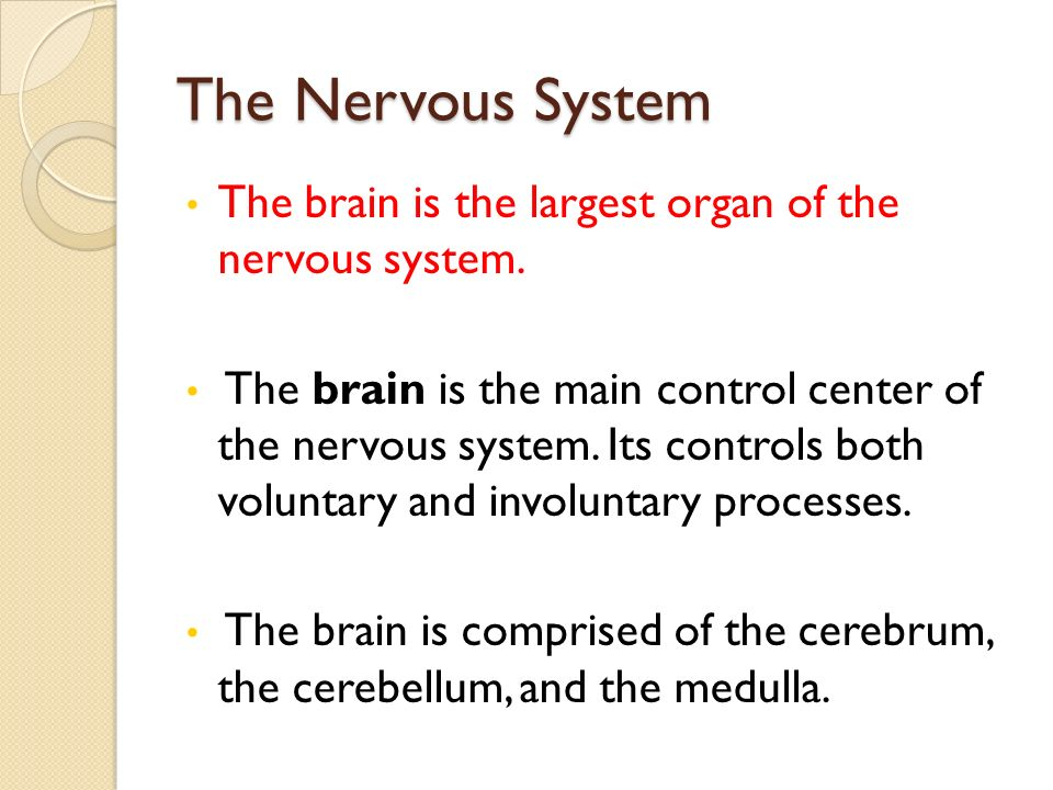 The Nervous System The brain is the largest organ of the nervous system.