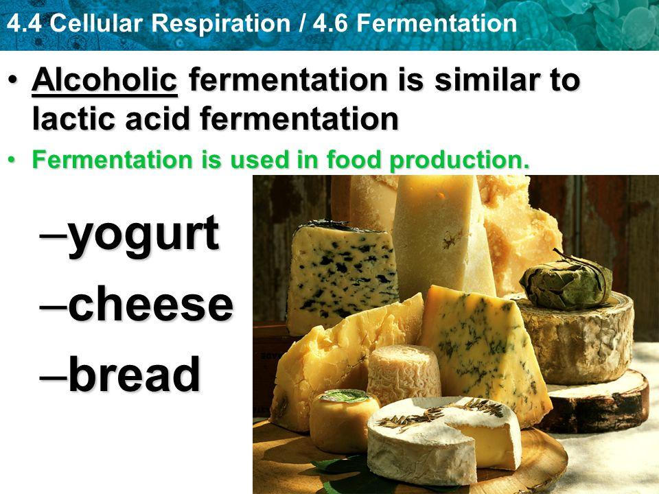 Alcoholic fermentation is similar to lactic acid fermentation