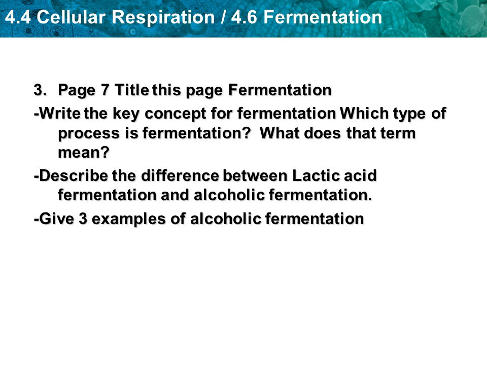 Page 7 Title this page Fermentation