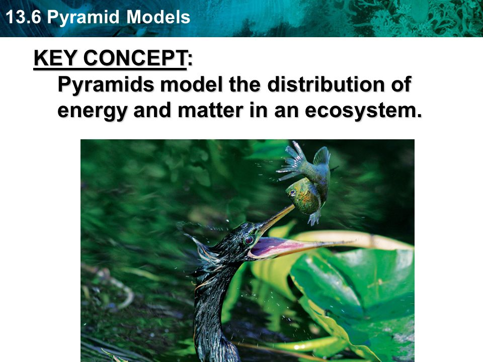 KEY CONCEPT: Pyramids model the distribution of energy and matter in an ecosystem.