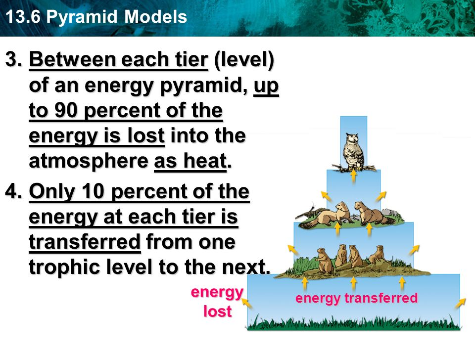 Between each tier (level) of an energy pyramid, up to 90 percent of the energy is lost into the atmosphere as heat.