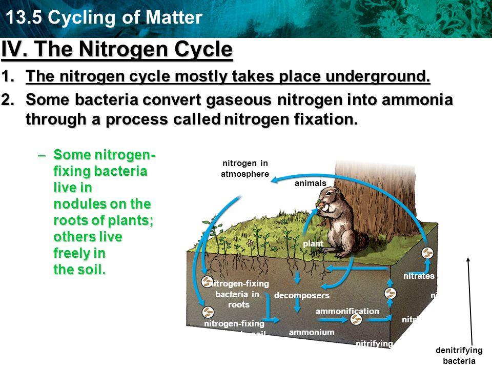 IV. The Nitrogen CycleThe nitrogen cycle mostly takes place underground.