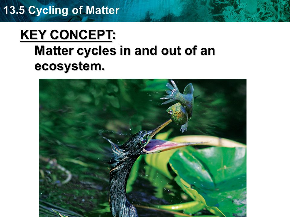 KEY CONCEPT: Matter cycles in and out of an ecosystem.