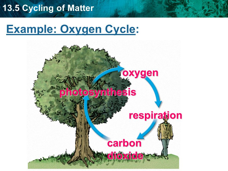 Example: Oxygen Cycle: