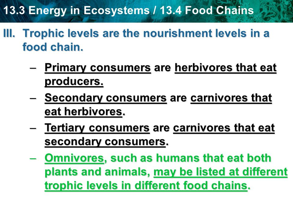 Trophic levels are the nourishment levels in a food chain.