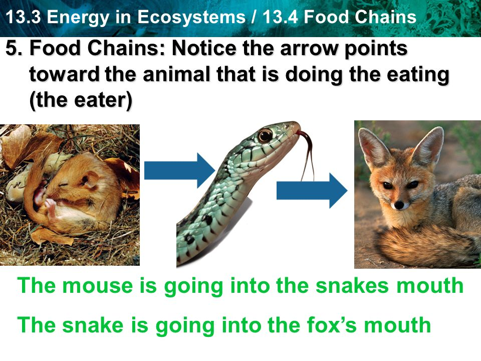 The mouse is going into the snakes mouth
