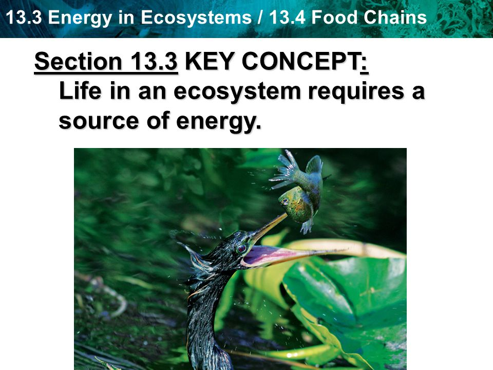 Section 13.3 KEY CONCEPT: Life in an ecosystem requires a source of energy.