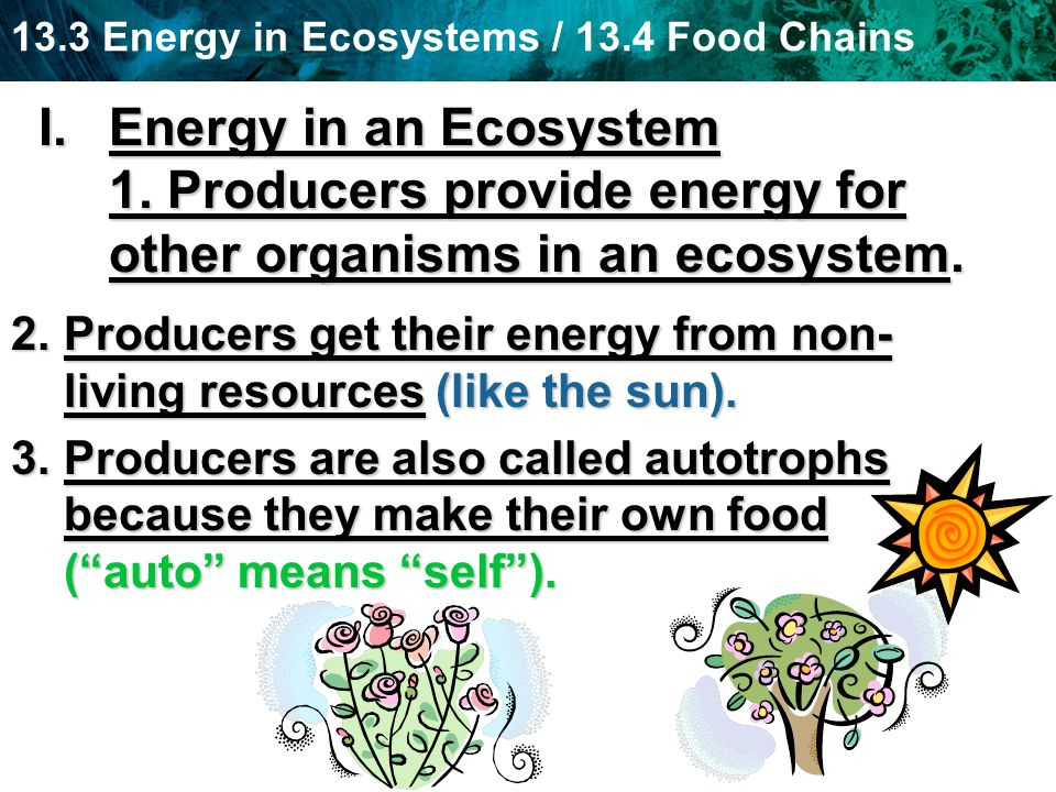 Energy in an Ecosystem 1. Producers provide energy for other organisms in an ecosystem.